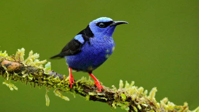 Take a Virtual Trip to Central Park to Learn About #BirdingWhile Black
