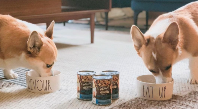 Mix Your Dog's Routine up With the Best Wet Food